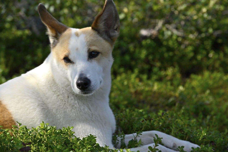Koiran valvonnan laiminlyönti